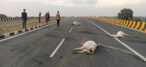 gaumata-dies-daily-in-home-minister's-district
